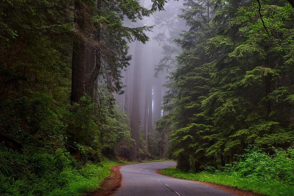 activités à faire en forêt